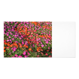 Field of purple pink orange impatients flowers photo cards