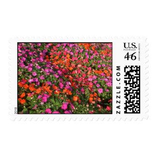 Field of purple pink orange impatients flowers postage stamps