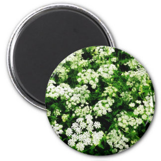 Field of Queen Anne s Lace Refrigerator Magnets