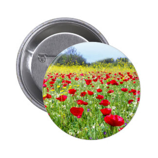 Field of red poppy flowers with yellow rapeseed button