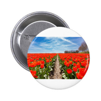 Field of red tulips flowers with blue sky pinback button