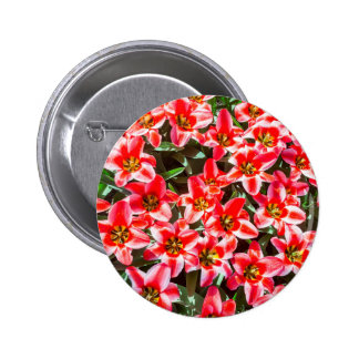 Field of red tulips from above pinback button