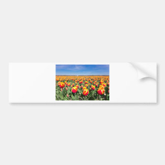 Field of red yellow tulips with blue sky bumper sticker