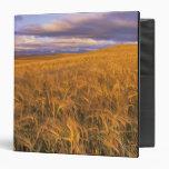 Field of Ripening Barley along the Rocky Binder