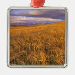 Field of Ripening Barley along the Rocky Metal Ornament