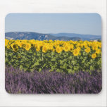 Field of sunflowers and lavender flowers, mouse pad
