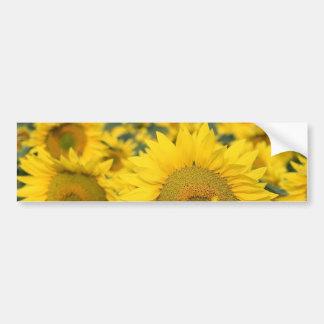 Field of Sunflowers Bumper Sticker Car Bumper Sticker