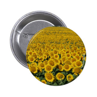 Field of Sunflowers Button