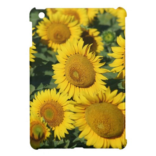 Field of Sunflowers Cover For The iPad Mini