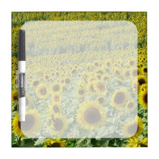 Field of Sunflowers Dry Erase Board