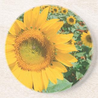 Field Of Sunflowers. Heidleberg District Drink Coaster