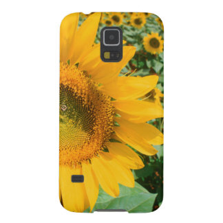 Field Of Sunflowers. Heidleberg District Galaxy S5 Cover