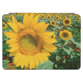 Field Of Sunflowers. Heidleberg District iPad Air Cover