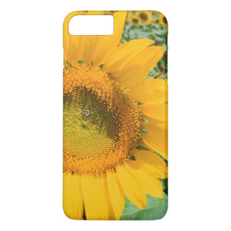 Field Of Sunflowers. Heidleberg District iPhone 7 Plus Case