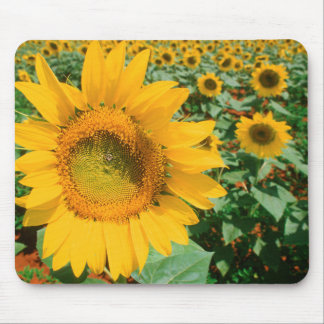 Field Of Sunflowers. Heidleberg District Mouse Pad