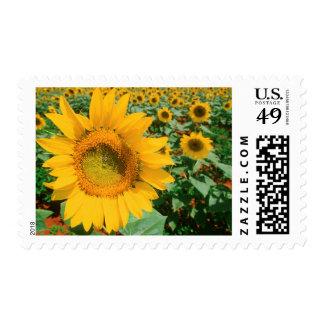 Field Of Sunflowers. Heidleberg District Postage