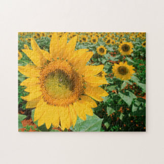 Field Of Sunflowers. Heidleberg District Puzzles