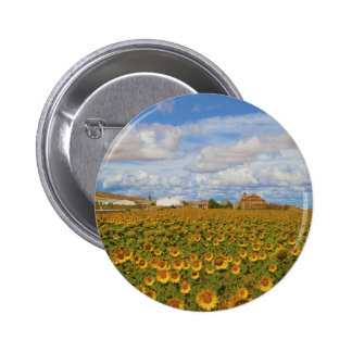 Field of sunflowers Helianthus annuus Button