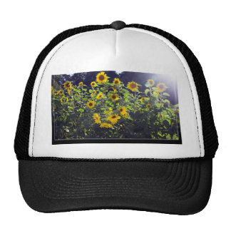 Field Of Sunflowers In Blossom Hats