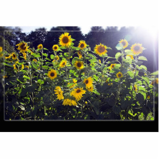 Field Of Sunflowers In Blossom Photo Sculpture