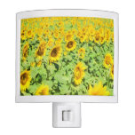 Field Of Sunflowers In Provence, France Night Light