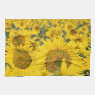 Field of Sunflowers Kitchen Towel