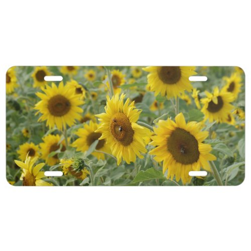 Field of Sunflowers License Plate