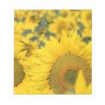 Field of Sunflowers Notepad