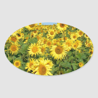 Field of sunflowers oval sticker
