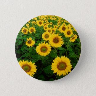 Field of Sunflowers Pinback Button