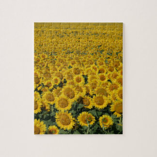 Field of Sunflowers Jigsaw Puzzles