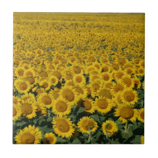 Field of Sunflowers Small Square Tile