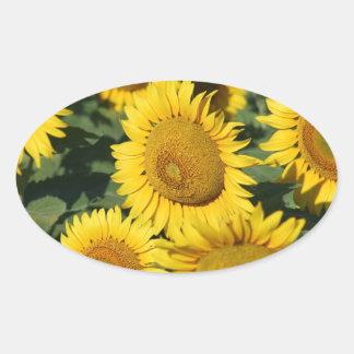 Field of Sunflowers Sticker