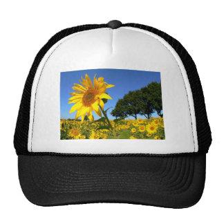 Field Of Sunflowers, Sunflower Mesh Hat