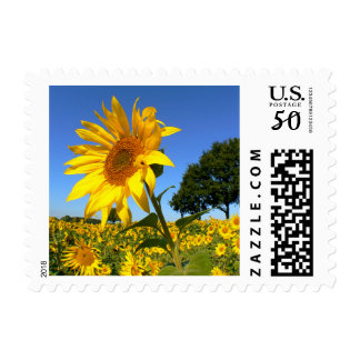Field Of Sunflowers, Sunflower Postage