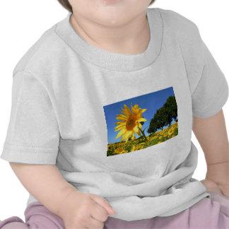 Field Of Sunflowers, Sunflower T Shirt