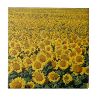 Field of Sunflowers Tile