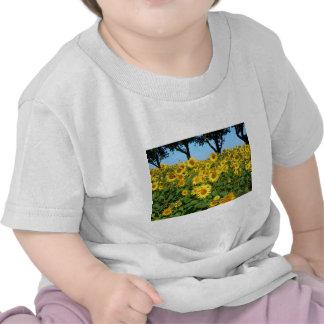 Field of sunflowers shirt