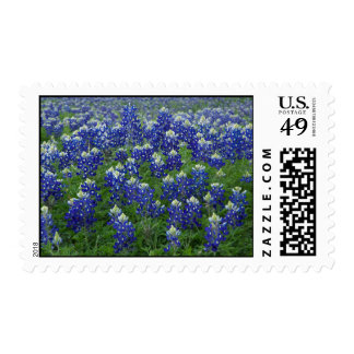 Field of Texas Bluebonnets Postage