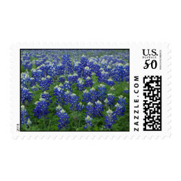 Field of Texas Bluebonnets Postage