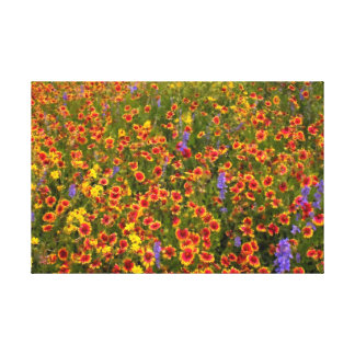 Field of Texas Indian Blankets Canvas Print