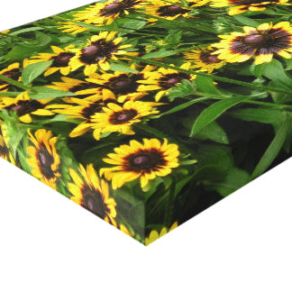 Field of Tiger Eye Flowers Wrapped Canvas