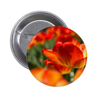 Field of Tulips Pinback Buttons