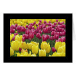 Field of Tulips Cards