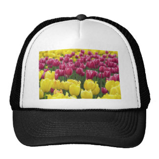 Field of Tulips Hat
