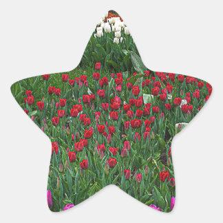 Field of Tulips Star Sticker
