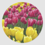 Field of Tulips Stickers