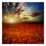 Field of wheat and sunset print