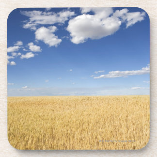 Field of wheat beverage coaster