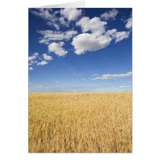Field of wheat card